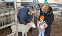 DOĞANCA - Vize İlçesinde 5 Genç Çiftçiye 185 Koyun Dağıtıldı