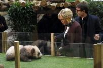 PANDA - Yavru Panda,  Brigitte Macron'a Saldırdı