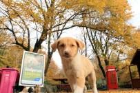 DOĞAL YAŞAM ALANI - Eyüpsultan'da Sokak Hayvanları İçin  'Doğal Yaşam Alanı' Kuruluyor