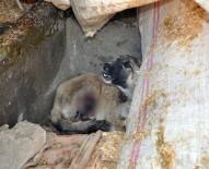 SOKAK KÖPEĞİ - Gaziantep'te Domdom Kurşunu İle Vurulmuş Sokak Köpeği Bulundu