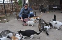 YAVRU KEDİ - Kedilerin Yolunu Gözlediği Muhtar