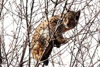 Nesli Tükenmekte Olan Vaşak Mahsur Kaldığı Ağaçtan Kurtarıldı