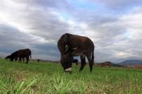 ADALA - Eşek Sütüyle Şifa Buldu, Çiftliğini Kurdu