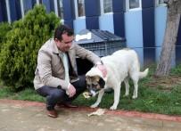 HAYVAN SEVERLER - Belediye Sokak Hayvanlarına Sahip Çıkıyor