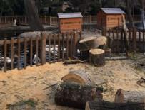 KUĞULU PARK - CHP'li Çankaya Belediyesi'nden ağaç katliamı