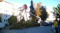 Efeler'de Ağaçlar Bakıma Alındı