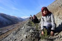 GENÇLİK VE SPOR BAKANLIĞI - Erzincan'da KYK'lı Gençler Gelecek İçin Fidan Dikti