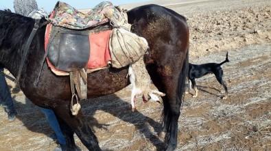 Konya'da Usulsüz Yaban Tavşan Avından 2 Kişiye Bin 630 Lira Ceza