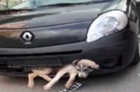 İBRAHIM ŞAHIN - Tampona Sıkışan Köpek İle Kilometrelerce Gitti
