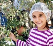 İHRACAT REKORU - Zeytincilik Sektörü Ortadoğu Pazarında Atak Yaptı