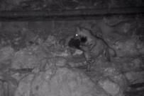 VEYSEL EROĞLU - Nesli Tükenme Tehlikesi Altında Olan Çizgili Sırtlan Kameralara Takıldı