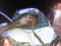 Otomobil İneğe Çarptı Açıklaması 2 Yaralı