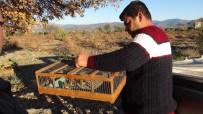 Gaziantep'te 100'E Yakın Kanarya Ve Saka Kuşu Ele Geçirildi