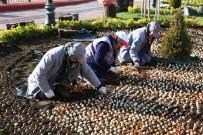 KEÇİÖREN BELEDİYESİ - Keçiören Lale Soğanlarıyla Donatılıyor