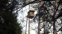 KUŞ YUVASI - 4 İldeki Ormanlara Bin 225 Kuş Yuvası
