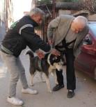 SIBIRYA - Bulunan Köpek Kendi Köpeği Çıkmayınca Hayal Kırıklığına Uğradı