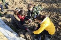 GIRNE - GAÜ Okullar Grubu Girne Belediyesi İle Ağaç Dikimine Katıldı