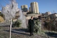 ŞELALE - Kocaeli'de Buz Tutan Yeşil Alandan Karposttallık Görüntüler
