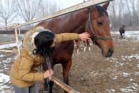 MÜSTESNA - Türkiye'nin Yarış Atları Ereğli'de Yetişiyor
