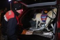 İSMAIL GÜNEŞ - Bolu'da Bomba Arama Köpeği İle Huzur Operasyonu