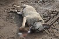 AHıLı - Kırıkkale'de Köpek Katliamı