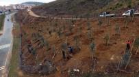 ÇIÇEKLI - Gebze Beylikbağı'na 250 Bin Adet Ağaç