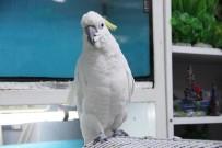 PET SHOP - 5 Asgari Ücret Fiyatında Papağan