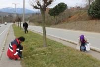 EKOLOJIK - Akçakoca Belediyesi Ağaçlandırmaya Önem Veriyor