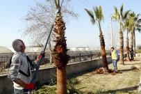 BILGE AKTAŞ - Akdeniz'deki Park Ve Bahçelere Bahar Bakımı