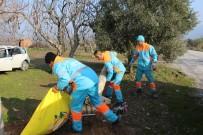 YENIKÖY - Kuşadası Belediyesi Temizlik Çalışmaları Sürüyor