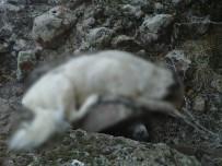 Afyonkarahisar'da Köpek Katliamı İddiası