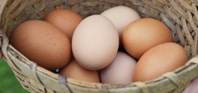 Almanya'da yumurta sıkıntısı