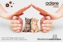 5 ARALıK - Atıl Malzemeler Kedi Evi Oluyor