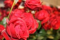 KIRMIZI GÜL - Çiçekçi Esnafı 14 Şubat Bereketini Yaşıyor