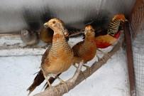 HAYVANAT BAHÇESİ - Hayran Bırakan Kuşlar