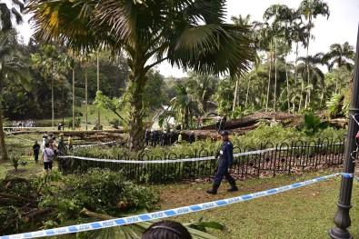 Singapur'da 270 yıllık ağaç devrildi