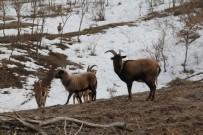 HAYVAN HAKLARı - Tabiat Parkı'ndaki Hayvan Popülasyonu Artıyor