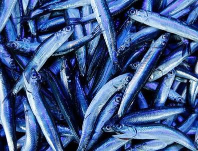 'Avrupa'da satılan omega 3 haplarının kaynağı Karadeniz hamsisi'