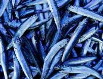 SU ÜRÜNLERİ - 'Avrupa'da satılan omega 3 haplarının kaynağı Karadeniz hamsisi'