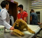 HAYVAN HAKLARı - Kurtarılan 'Kuyu' İsimli Köpek Tedavi İçin Hayvan Hastanesine Gönderildi