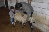 90 Koyunun Telef Olduğu Mahallede İnceleme Yapıldı