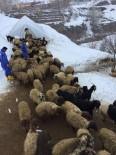 SONBAHAR - Bitlis'te Şap Aşısı Ve Küpeleme Çalışması