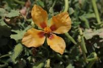 Alakır Vadisi'nde Yeni Bir Bitki Türü Bulundu