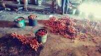 Çiftlikte Çıkan Yangında Binlerce Yumurta Kül Oldu