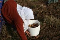 Cipslik Patates Üreticilerinden Mağduriyetlerinin Giderilmesine Teşekkür