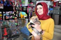 HAYVAN SEVGİSİ - Küçük Yaşta Evcil Hayvan Yetiştiren Çocuklar Hayatta Daha Başarılı Oluyor