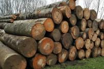 AÇIK ARTTIRMA - 3 Bin 235 Metreküp Orman Emvali Satıldı