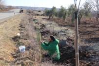 ÇIÇEKLI - Kilis'te Karayolları Ağaçlandırılıyor