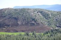 ORMAN YANGINI - Kilis'te Yanan Orman Alanı Yeniden Ağaçlandırılıyor