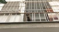 NAMIK KEMAL - Hayvansever Kadının Duyarlılığı, Polisi Ve İtfaiyeyi Alarma Geçirdi